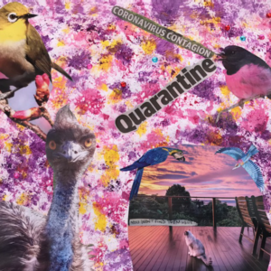 "A collage with photos of an emu, four birds and a cat on a colourful background and the text ""Coronavirus contagion"" ""Quarantine"" ""You won't find them here"""